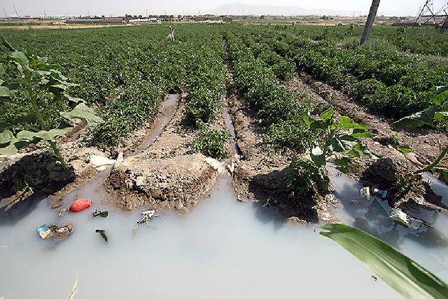 کشت سبزی ری با فاضلاب شهری