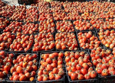 صادرات محصولات کشاورزی در اصفهان کنترل گردد