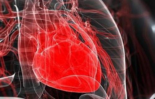 خبرنگاران گزارش می دهد؛ کوشش دانشمندان ایرانی برای ساخت قلب تپنده، بازسازی قلب موش با استفاده از سلول های انسانی