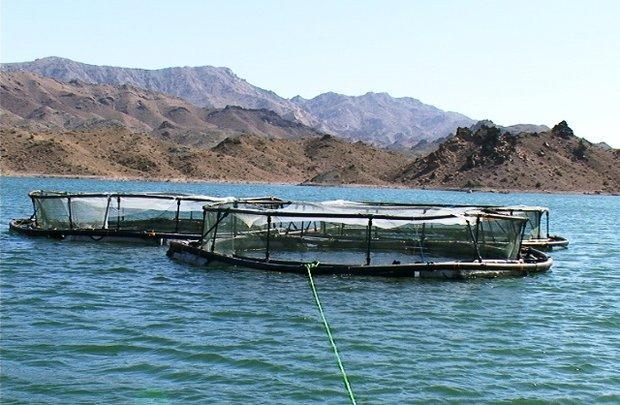 لزوم تغییر نگاه آب و برق خوزستان در اجرای طرح پروش ماهی در قفس