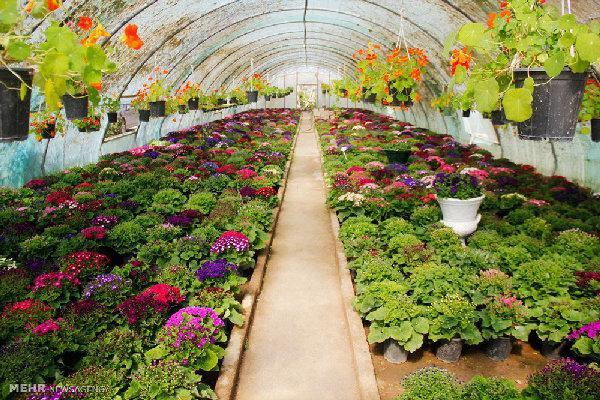 وسعت گلخانه های کشور به 15 هزار هکتار رسیده است