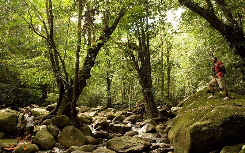 پارک ملی گونونگ گادینگ در مالزی و تماشای یکی از بزرگ ترین گل های جهان
