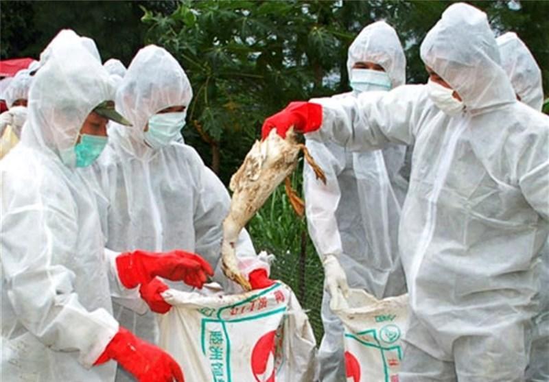 ممنوعیت خرید و فروش ماکیان زنده در شرق چین
