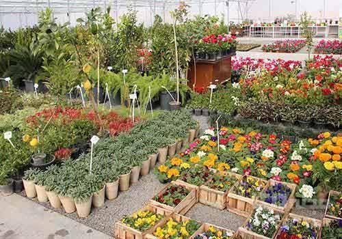 مرکز فروش گیاهان آپارتمانی تهران ؛ بهشت کوچک
