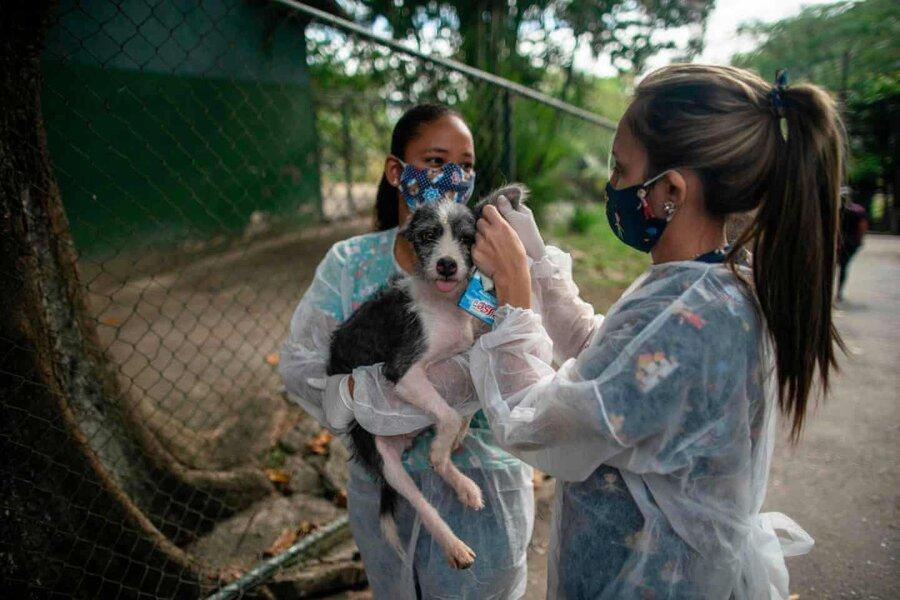 عکس روز، حیوانی برای دوران قرنطینه