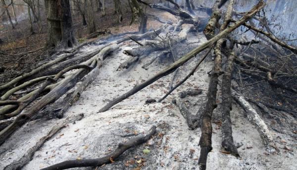 آتش در جنگل های گلستان آرام گرفت